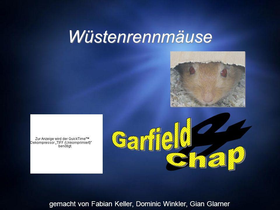 Wüstenrennmäuse & Garfield Chap