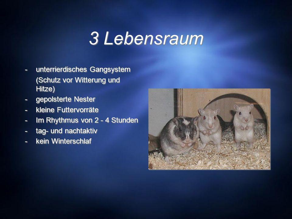 3 Lebensraum - unterrierdisches Gangsystem