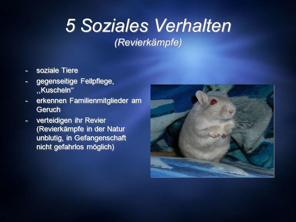 5 Soziales Verhalten (Revierkämpfe)