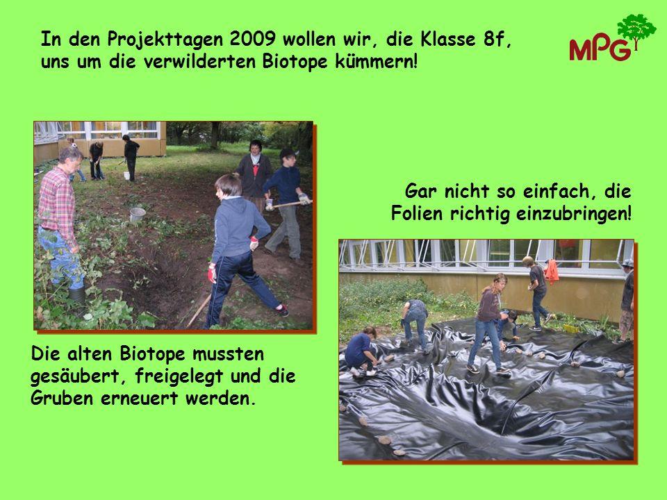 In den Projekttagen 2009 wollen wir, die Klasse 8f, uns um die verwilderten Biotope kümmern!
