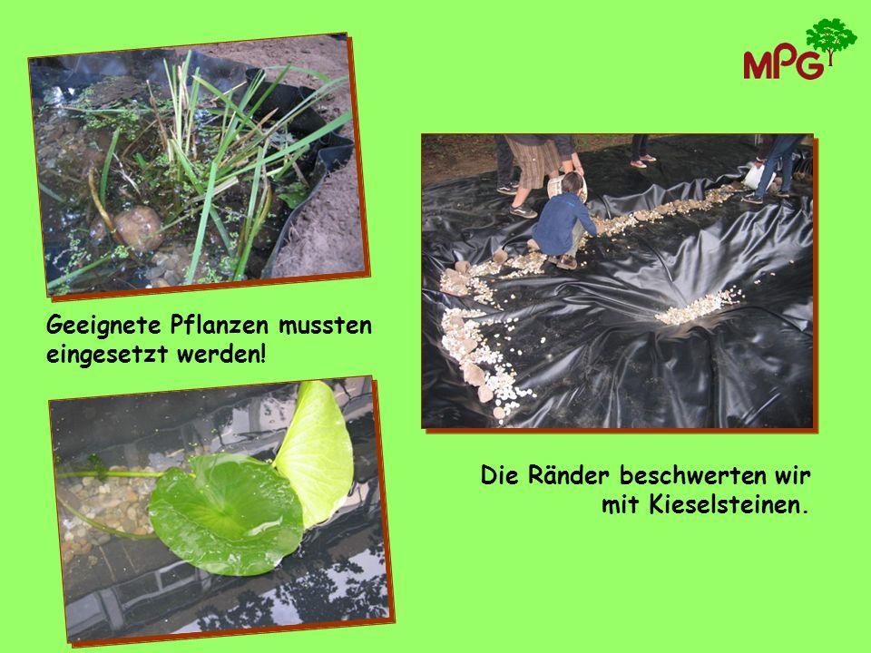 Geeignete Pflanzen mussten eingesetzt werden!