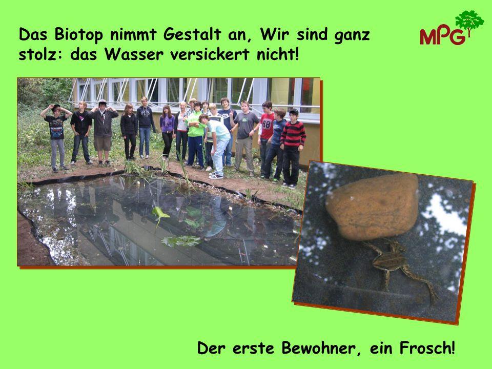 Das Biotop nimmt Gestalt an, Wir sind ganz stolz: das Wasser versickert nicht!