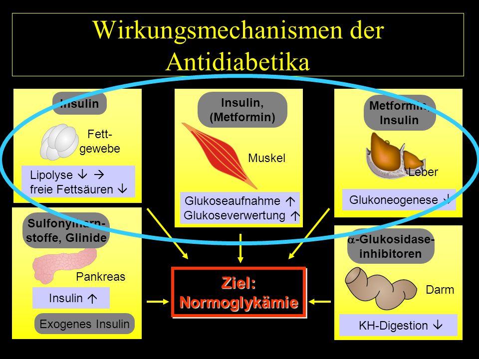 Wirkungsmechanismen der Antidiabetika