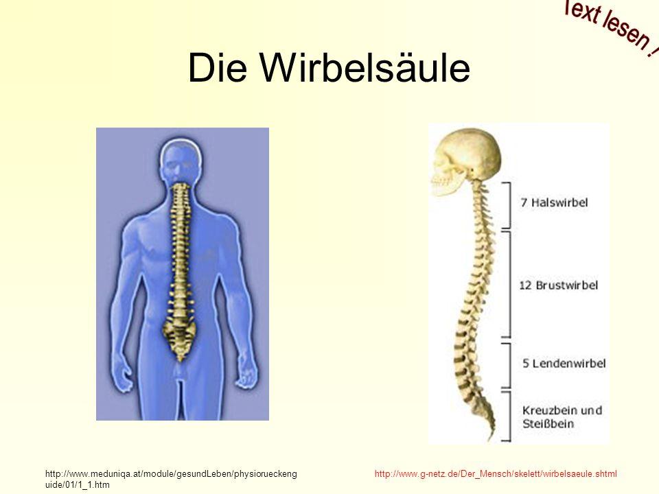 Fantastisch Wirbelsäule Wirbel Galerie - Menschliche Anatomie Bilder ...
