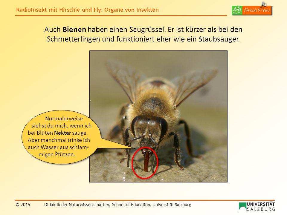 Auch Bienen haben einen Saugrüssel