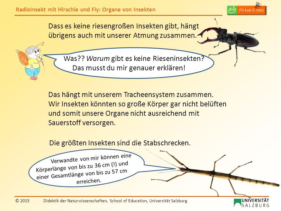 Was Warum gibt es keine Rieseninsekten