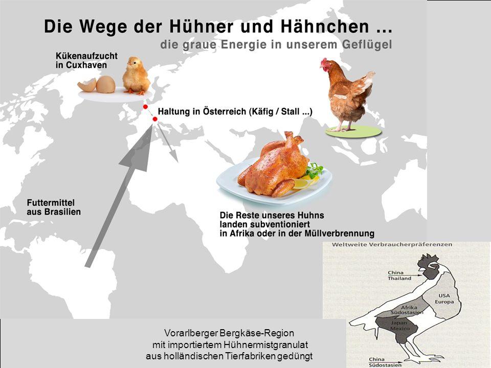 Vorarlberger Bergkäse-Region mit importiertem Hühnermistgranulat