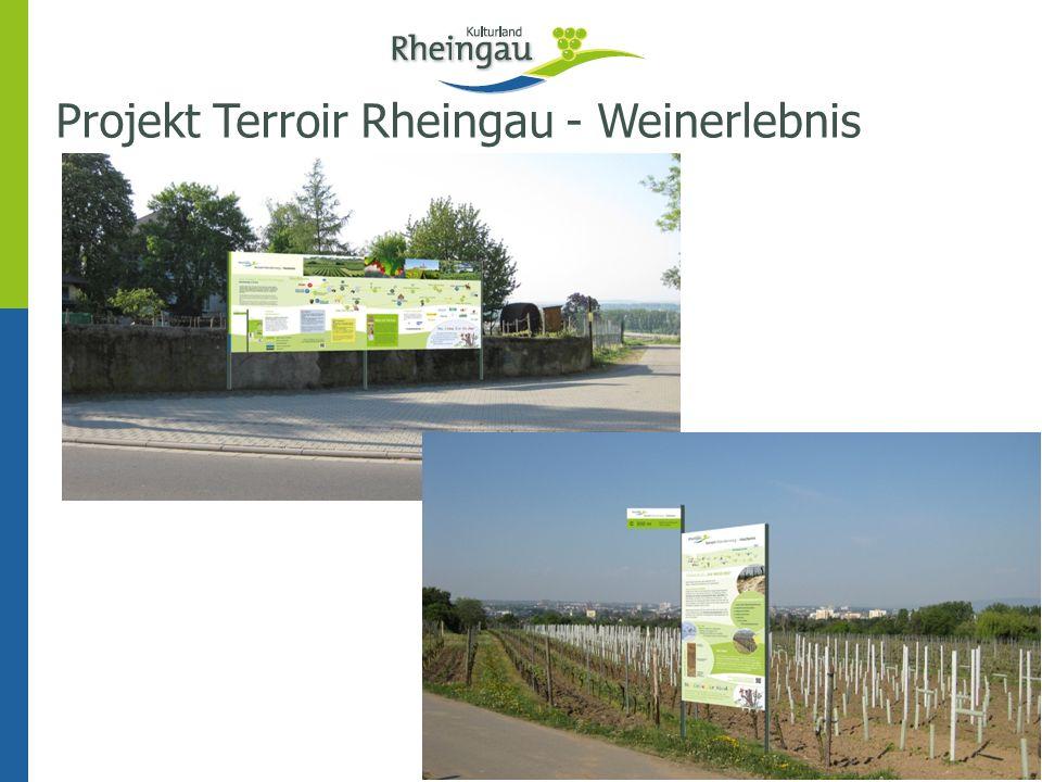 Projekt Terroir Rheingau - Weinerlebnis