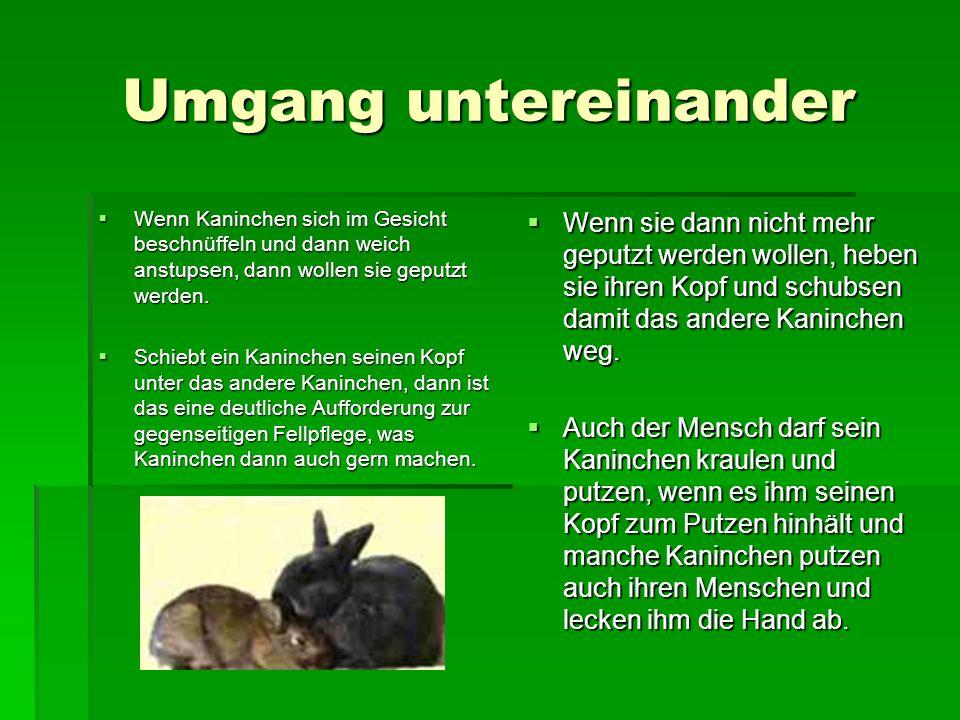 Umgang untereinander Wenn Kaninchen sich im Gesicht beschnüffeln und dann weich anstupsen, dann wollen sie geputzt werden.