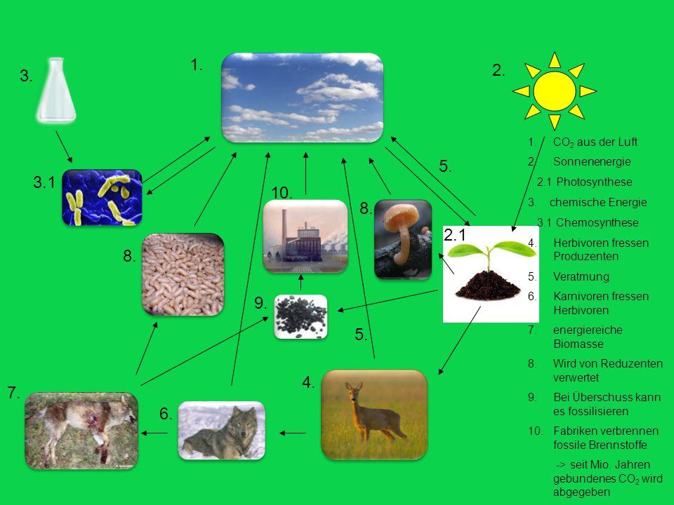 1. 2. 3. CO2 aus der Luft. Sonnenenergie. 2.1 Photosynthese. 3. chemische Energie. 3.1 Chemosynthese.