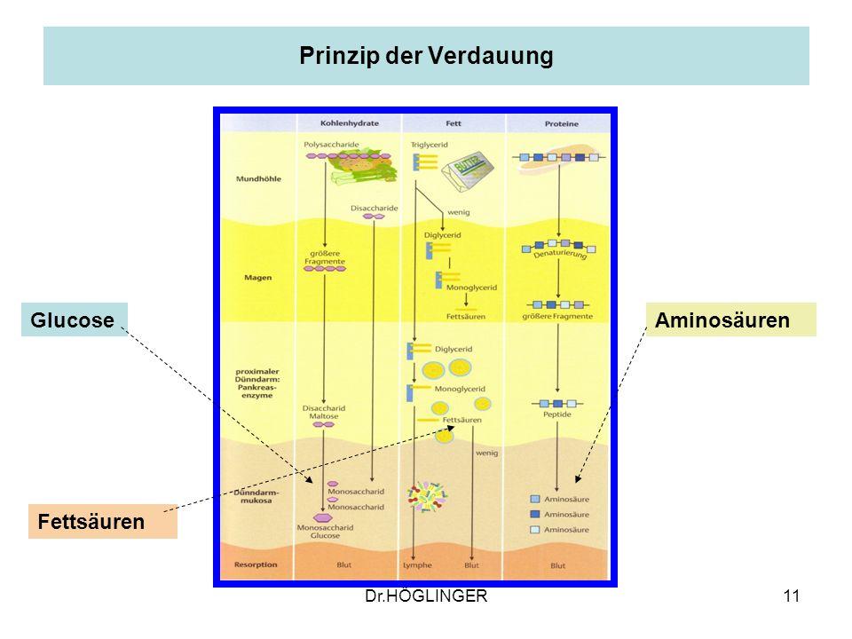 Prinzip der Verdauung Glucose Aminosäuren Fettsäuren Dr.HÖGLINGER