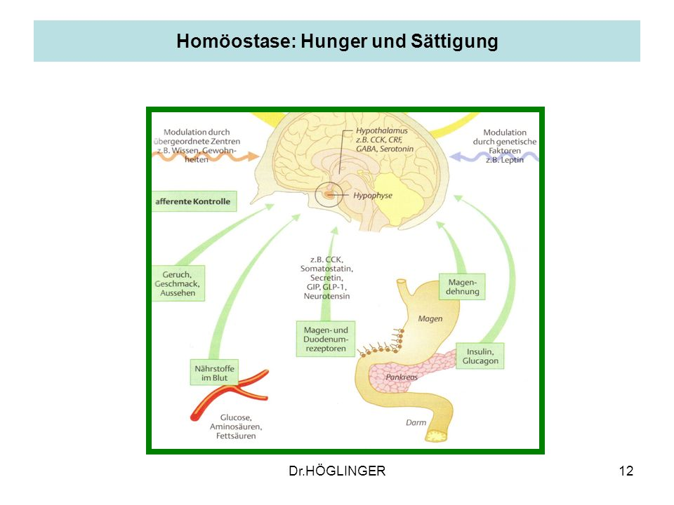 Homöostase: Hunger und Sättigung