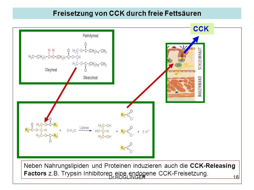 Freisetzung von CCK durch freie Fettsäuren