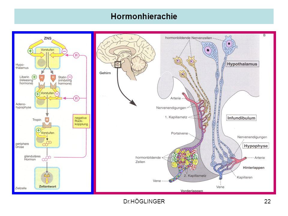 Hormonhierachie Dr.HÖGLINGER