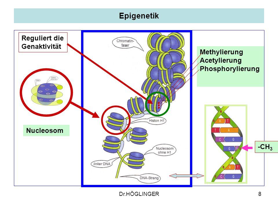 Epigenetik Reguliert die Genaktivität Methylierung Acetylierung