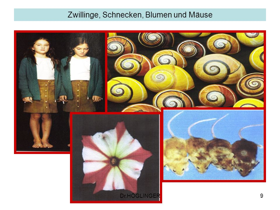 Zwillinge, Schnecken, Blumen und Mäuse