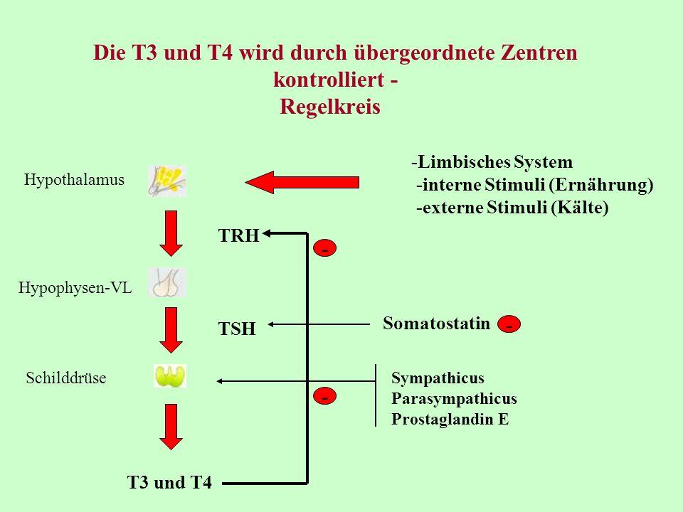 cholesterinstoffwechsel