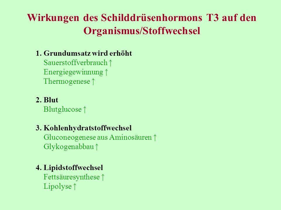 Wirkungen des Schilddrüsenhormons T3 auf den Organismus/Stoffwechsel