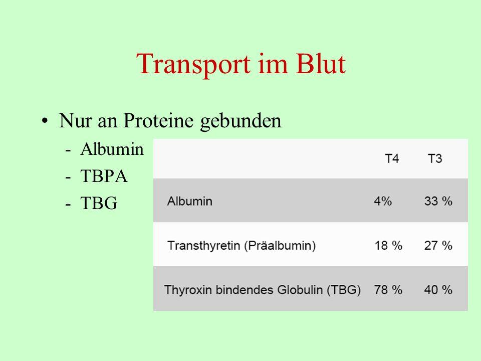 Transport im Blut Nur an Proteine gebunden Albumin TBPA TBG