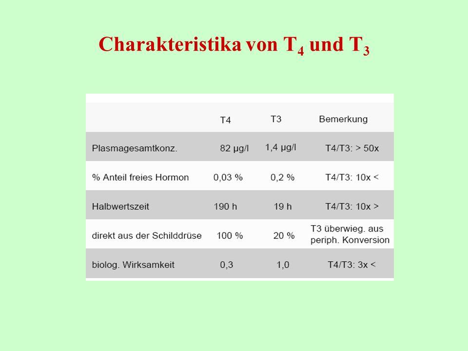 Charakteristika von T4 und T3