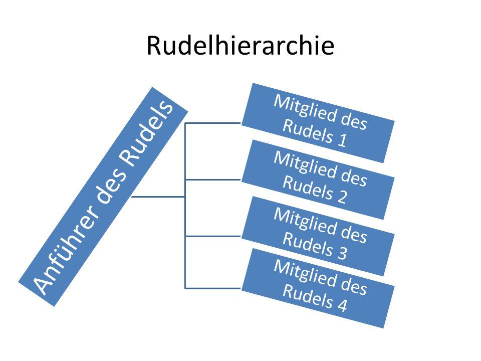 Rudelhierarchie Anführer des Rudels Mitglied des Rudels 1