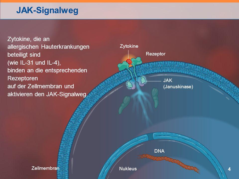 JAK-Signalweg