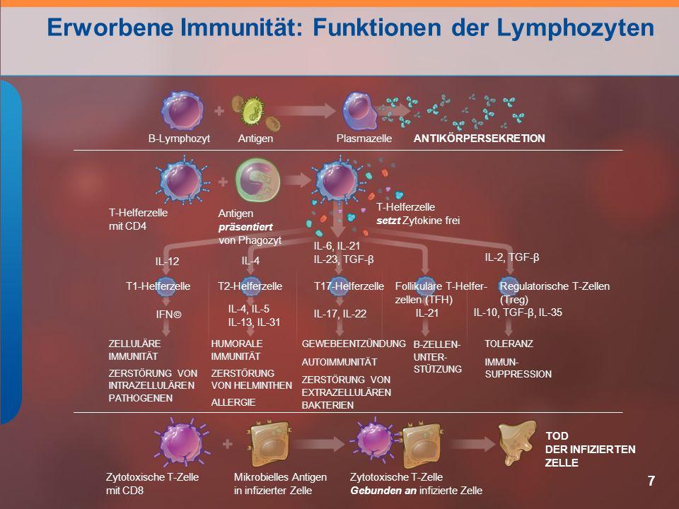 Erworbene Immunität: Funktionen der Lymphozyten