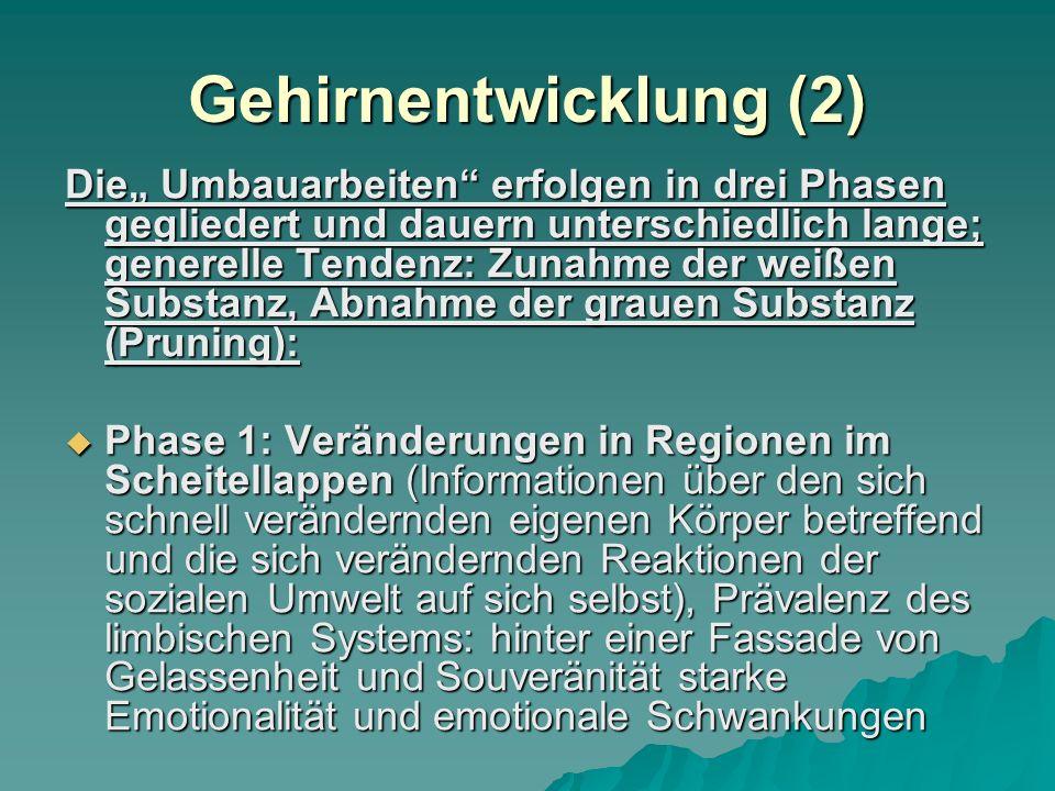 Gehirnentwicklung (2)