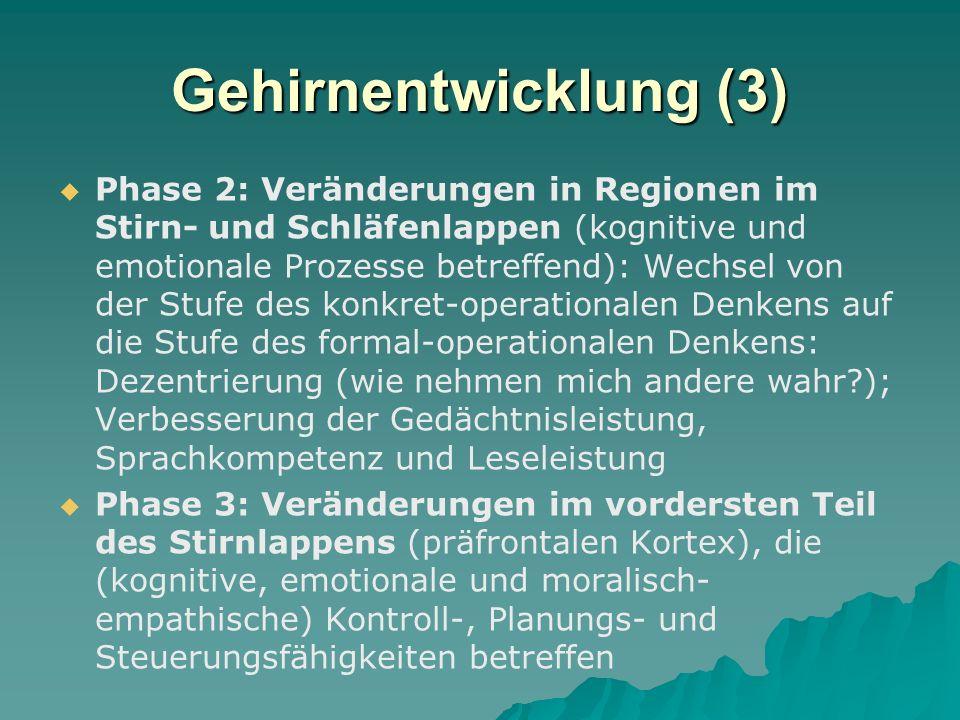 Gehirnentwicklung (3)