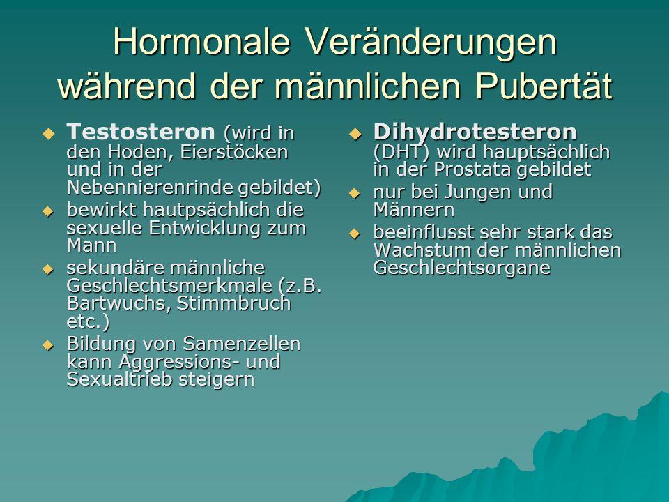 Hormonale Veränderungen während der männlichen Pubertät