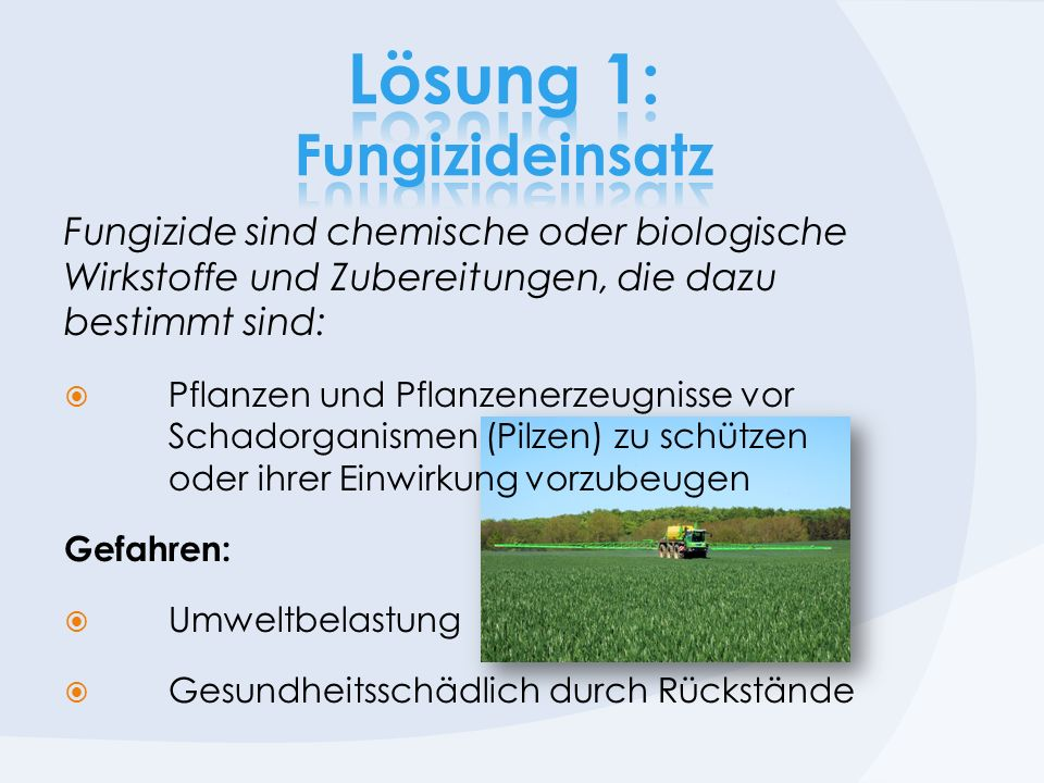 Lösung 1: Fungizideinsatz