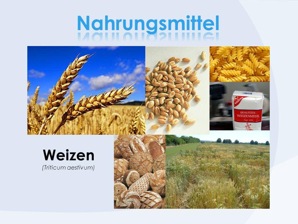 Nahrungsmittel Weizen (Triticum aestivum)