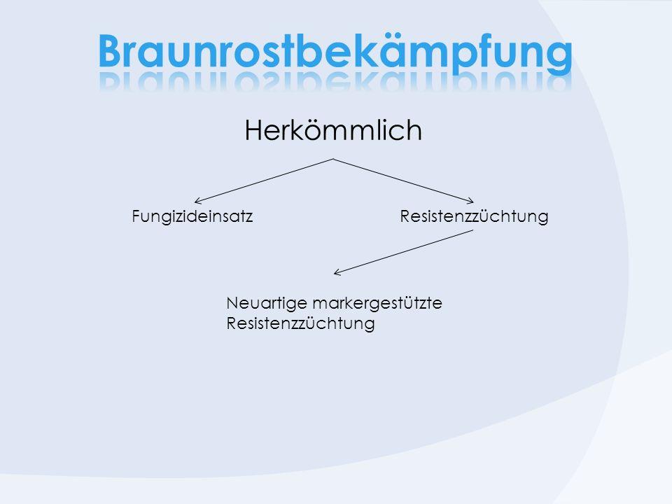 Braunrostbekämpfung Herkömmlich Fungizideinsatz Resistenzzüchtung
