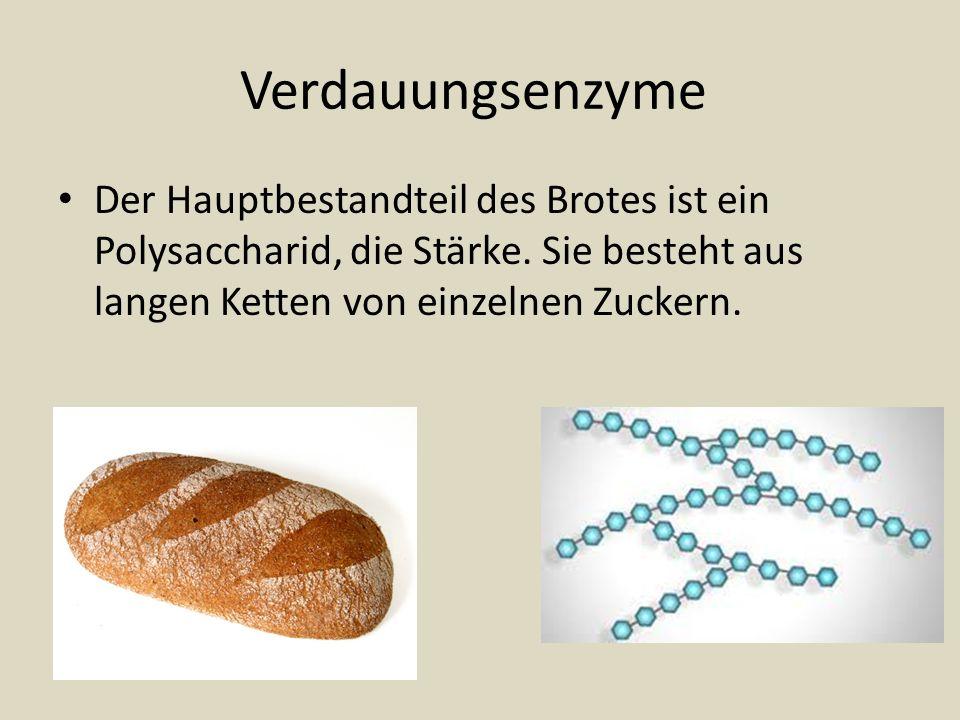 VerdauungsenzymeDer Hauptbestandteil des Brotes ist ein Polysaccharid, die Stärke.