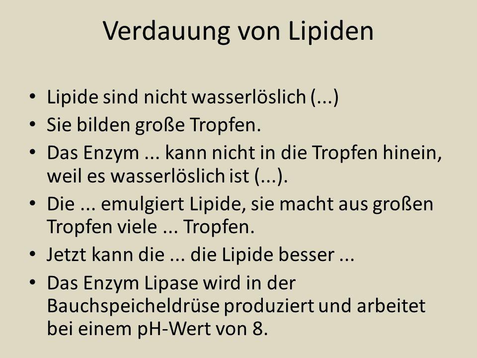 Verdauung von Lipiden Lipide sind nicht wasserlöslich (...)