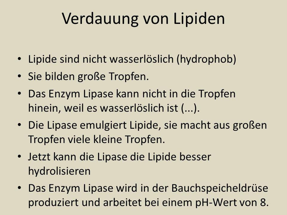 Verdauung von Lipiden Lipide sind nicht wasserlöslich (hydrophob)
