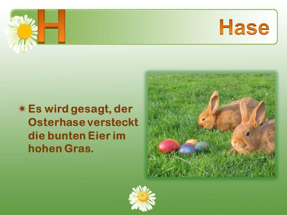 H Hase Es wird gesagt, der Osterhase versteckt die bunten Eier im hohen Gras.
