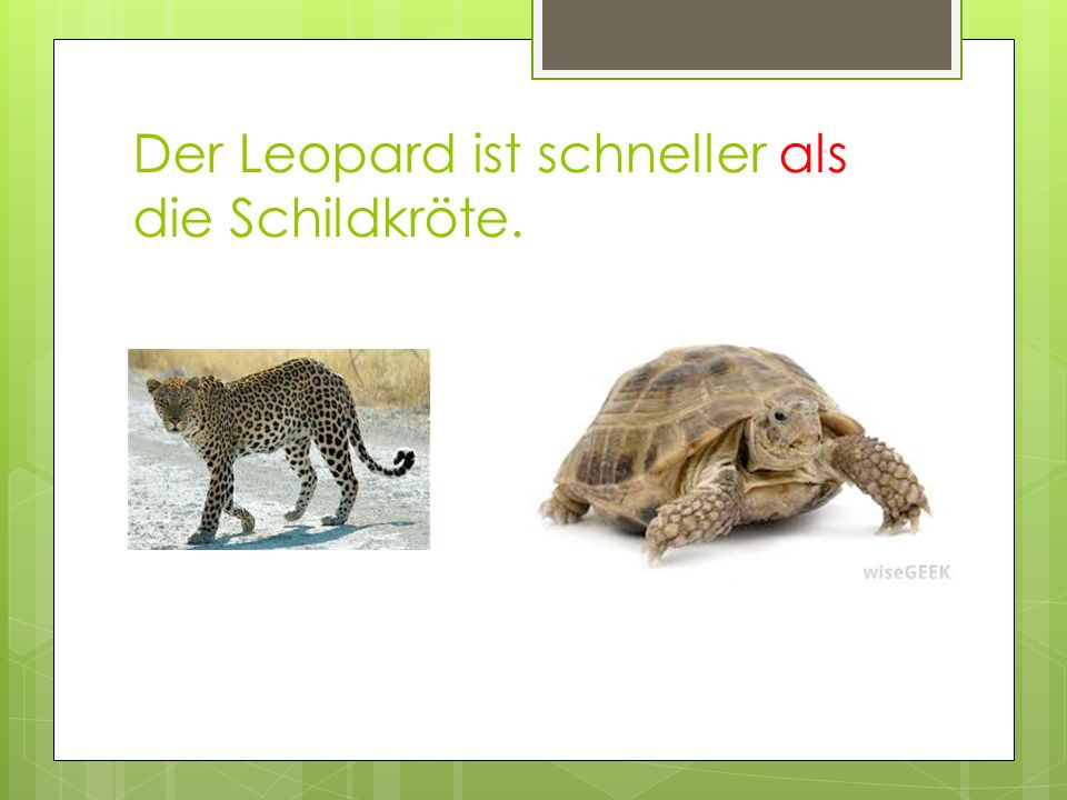 Der Leopard ist schneller als die Schildkröte.