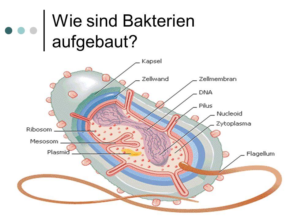 Wie sind Bakterien aufgebaut