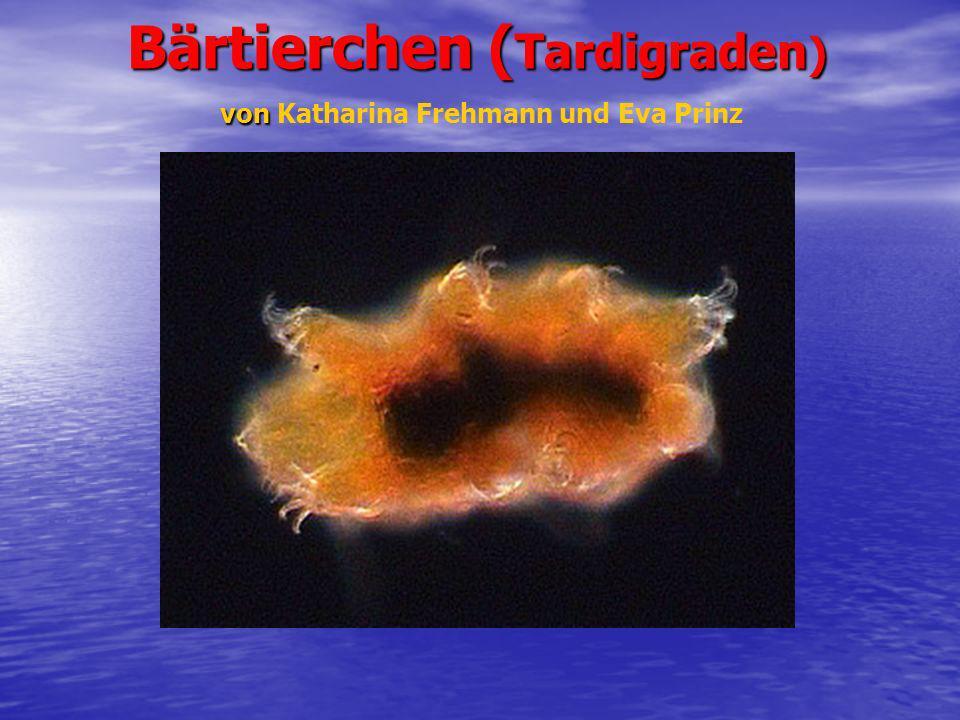 Bärtierchen (Tardigraden) von Katharina Frehmann und Eva Prinz