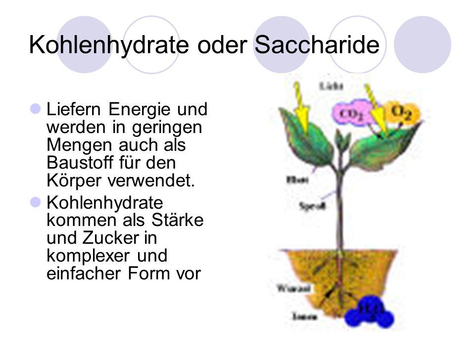 Kohlenhydrate oder Saccharide