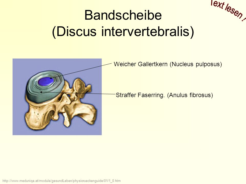 Bandscheibe (Discus intervertebralis)