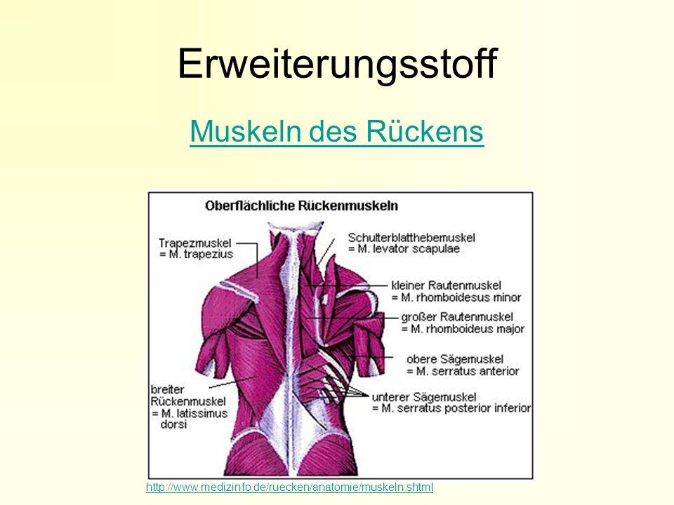 Erweiterungsstoff Muskeln des Rückens