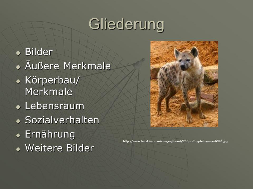 Gliederung Bilder Äußere Merkmale Körperbau/ Merkmale Lebensraum