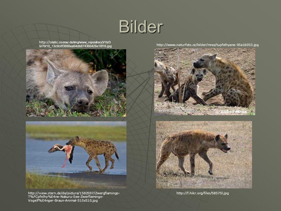 Bilder http://static.zoonar.de/img/www_repository3/1b/35/70/10_13c9c8f3888aa64db874365426e10f16.jpg.