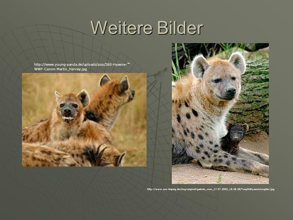 Weitere Bilder http://www.young-panda.de/uploads/pics/260-Hyaene--WWF-Canon-Martin_Harvey.jpg.