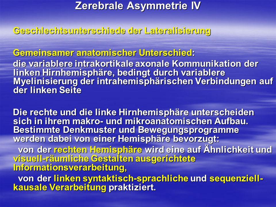 Zerebrale Asymmetrie IV