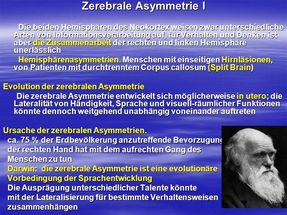 Zerebrale Asymmetrie I