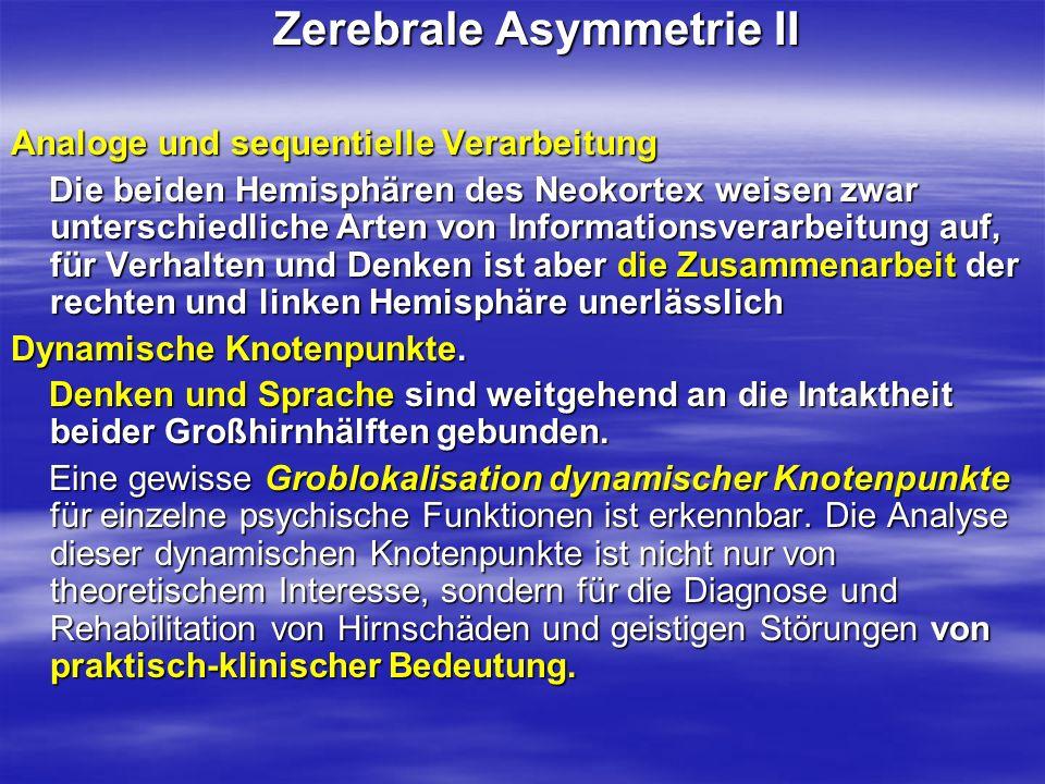 Zerebrale Asymmetrie II