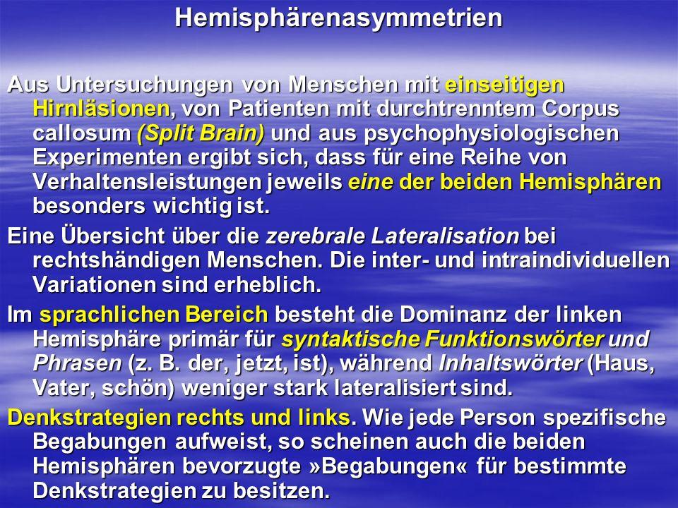 Hemisphärenasymmetrien